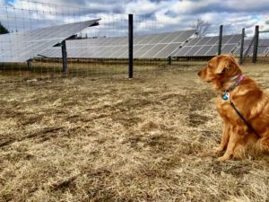 dog columbia county community solar