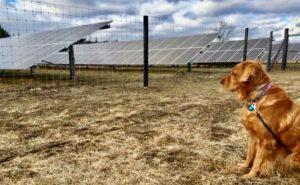 dog columbia county community solar