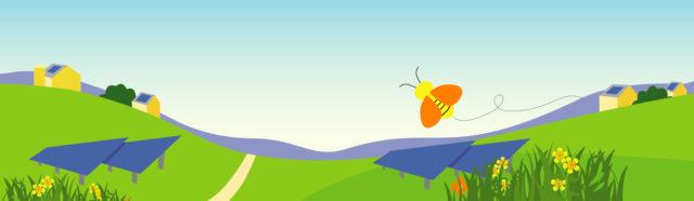 CSA Wildflower Background