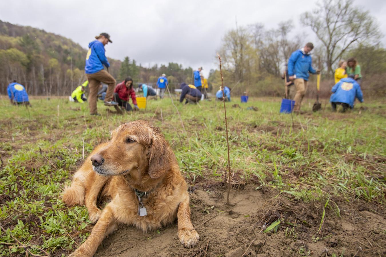 SunCommon Tree Planting Dog
